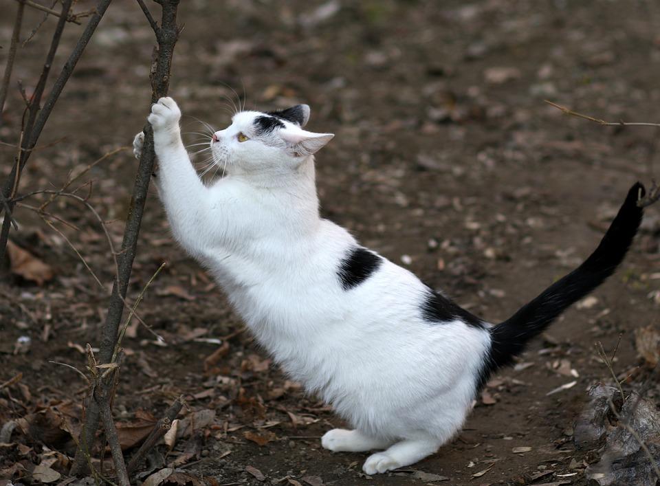 Cat, White, Black, Fur, Claws, Feline, Cute, Tamed