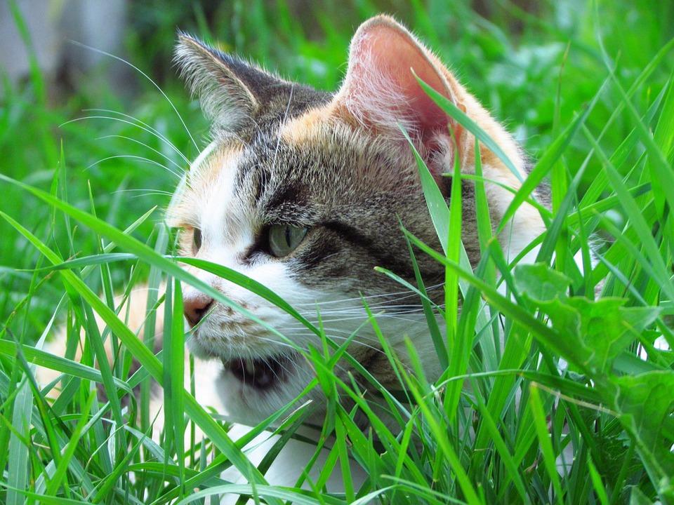 Cat, Garden, Tortoiseshell, Domestic, Feline, Outdoor