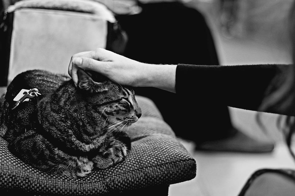 Tabby Cat, Cat With Closed Eyes, Cat Falling Asleep