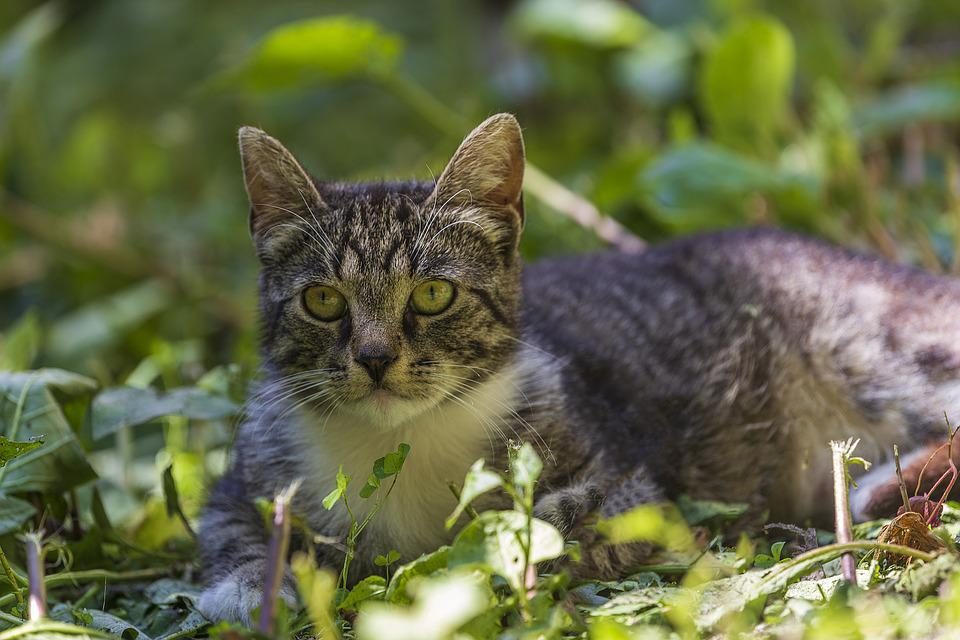 Cat, Beautiful Girl, Yard, St Petersburg, Russia
