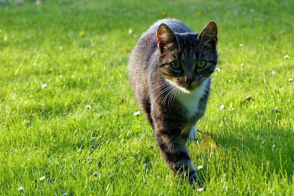 Cat, Young, Summer, Meadow