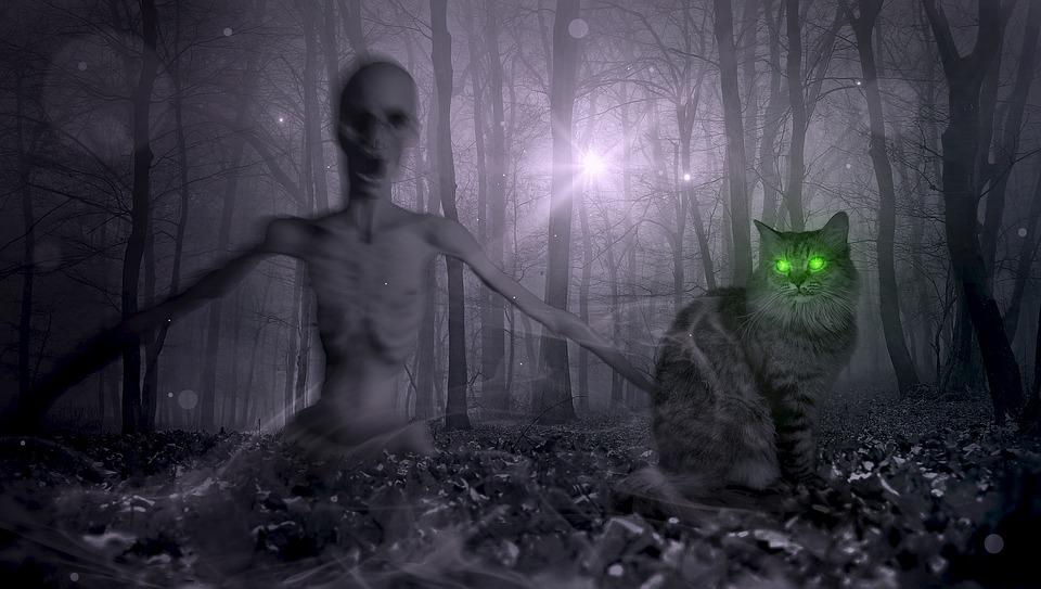 fantasy forest zombie cat creepy halloween