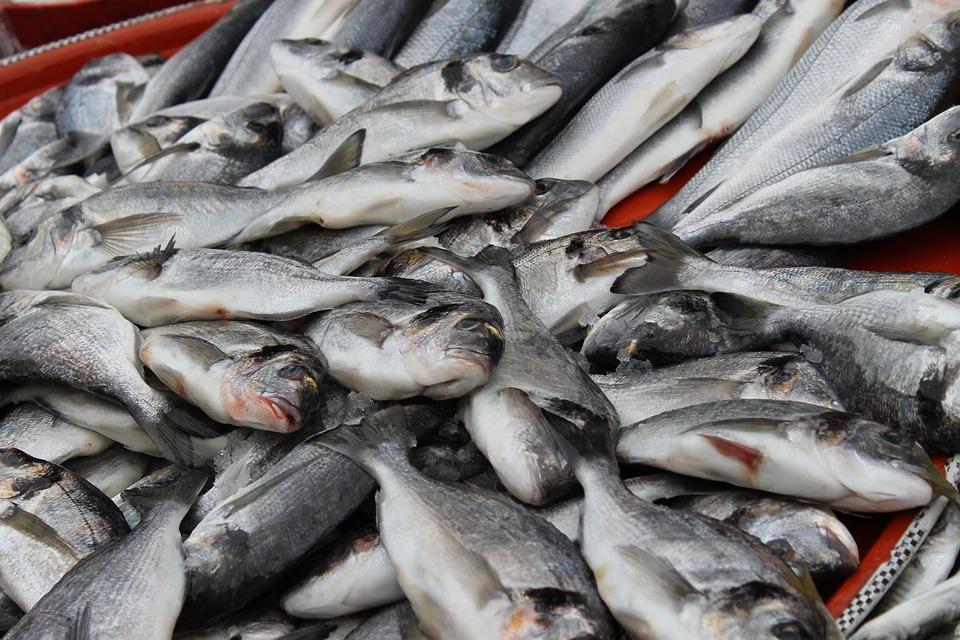 Seafood, Sea, Animal Kingdom, Catch