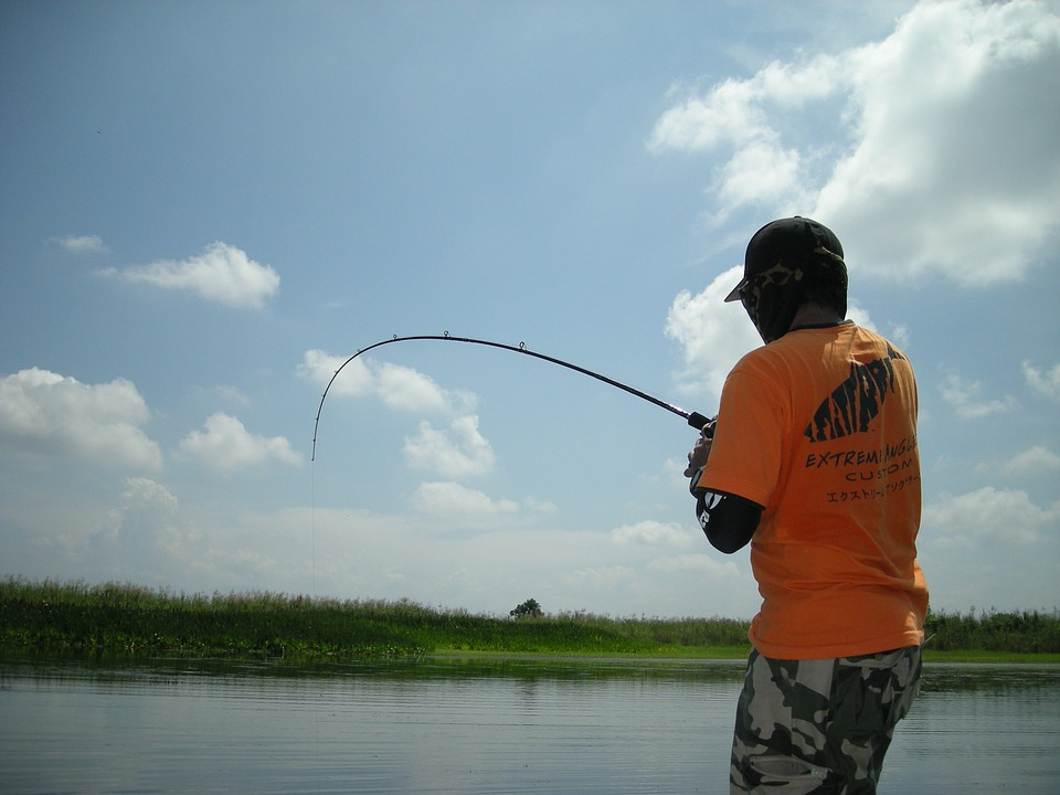 Angling, Fish, Catch, Hobby, Freshwater, Angler