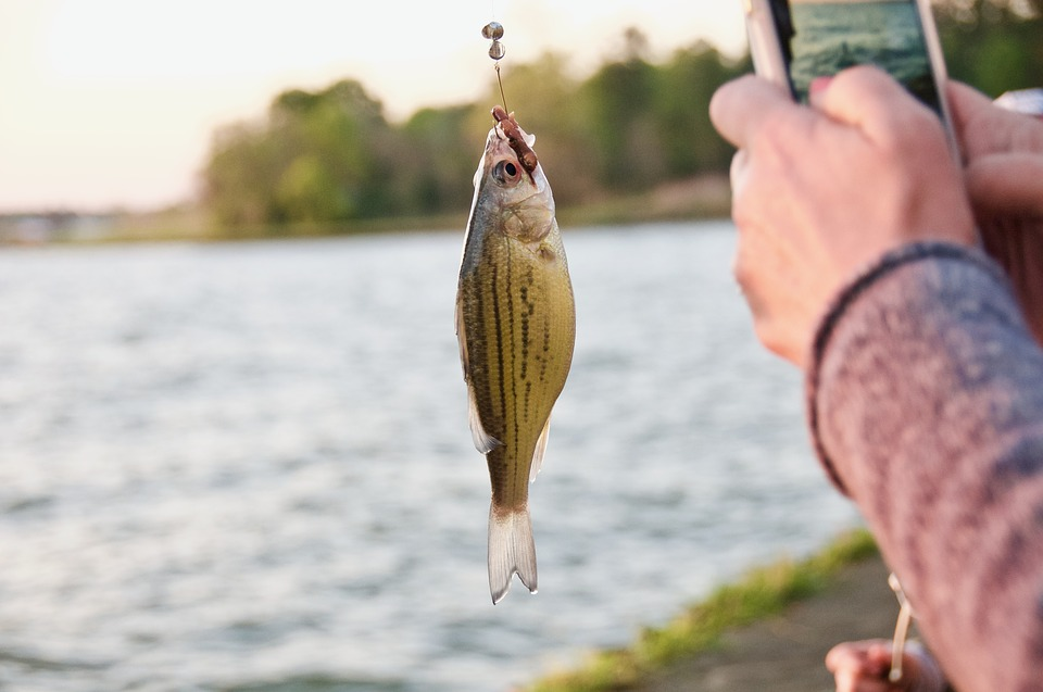 Fish, Food, Stomach, Lake, Camp, Sport, Catch, Worm