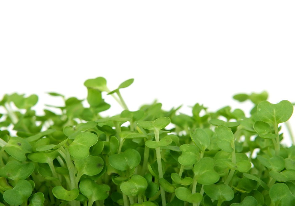 Bloom, Catering, Colorful, Cooking, Cress, Delicious