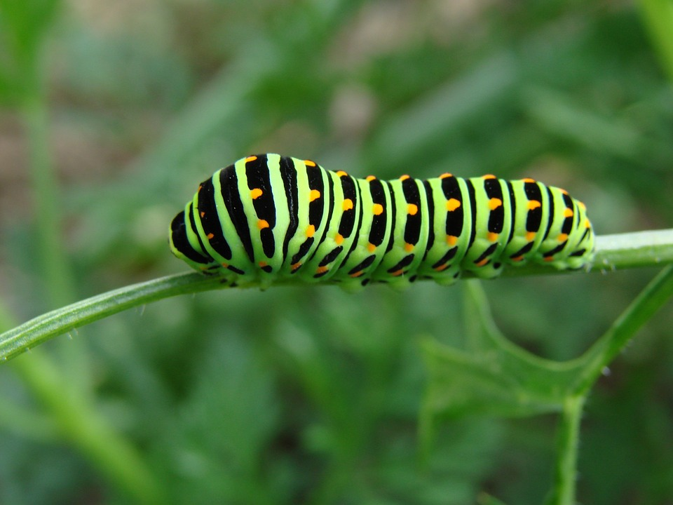 Nature, Green, Caterpillar, Black, Yellow, Orange