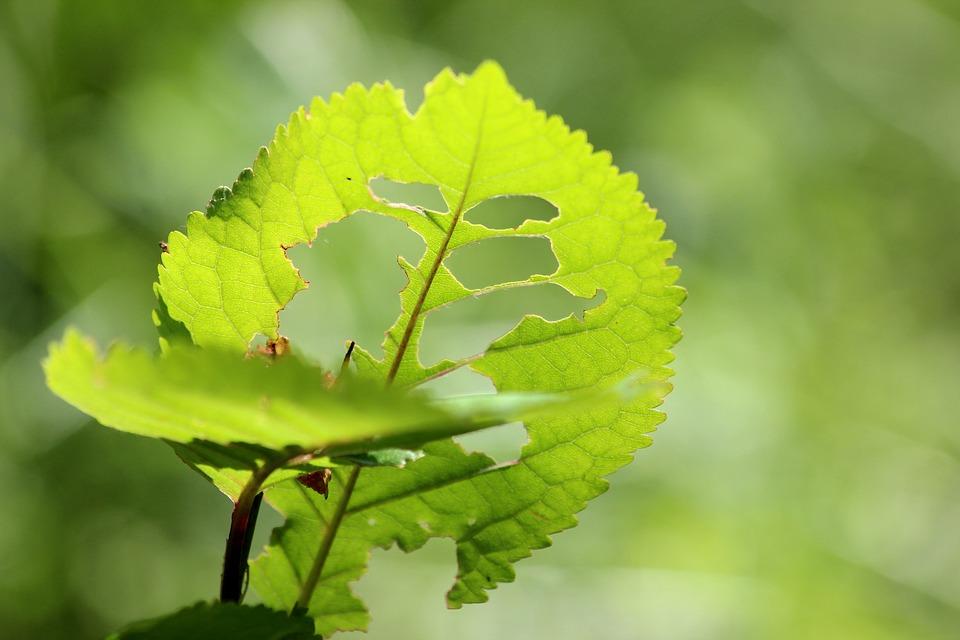 Leaf, Tree, Green, Caterpillar, Wood, Nature, Eat