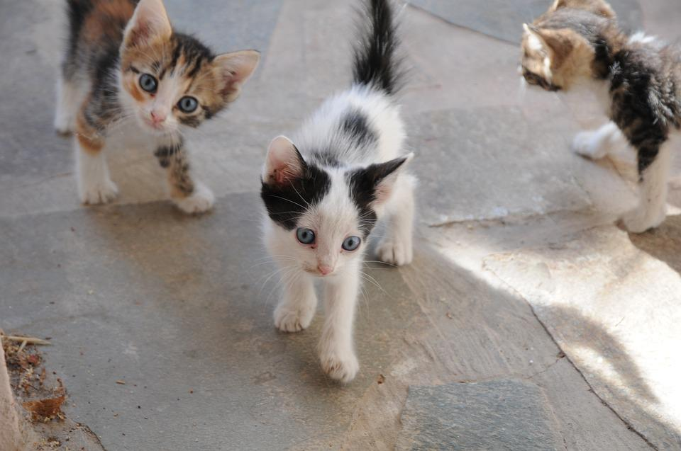 Cats, Cats In The Street, Cat