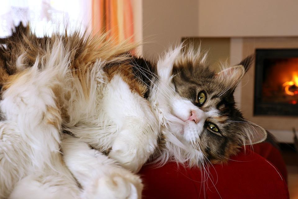 Cat, Eyes, Domestic Cat, Look, Mustache, Cat's Eyes