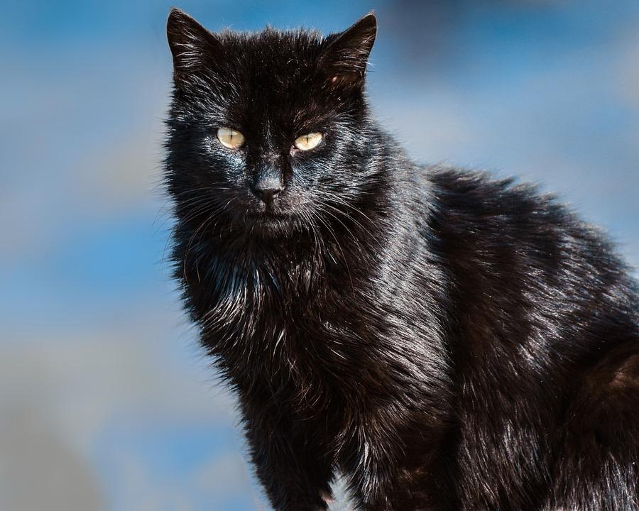 Cat, Animal, Cat Portrait, Cat's Eyes, Wildcat