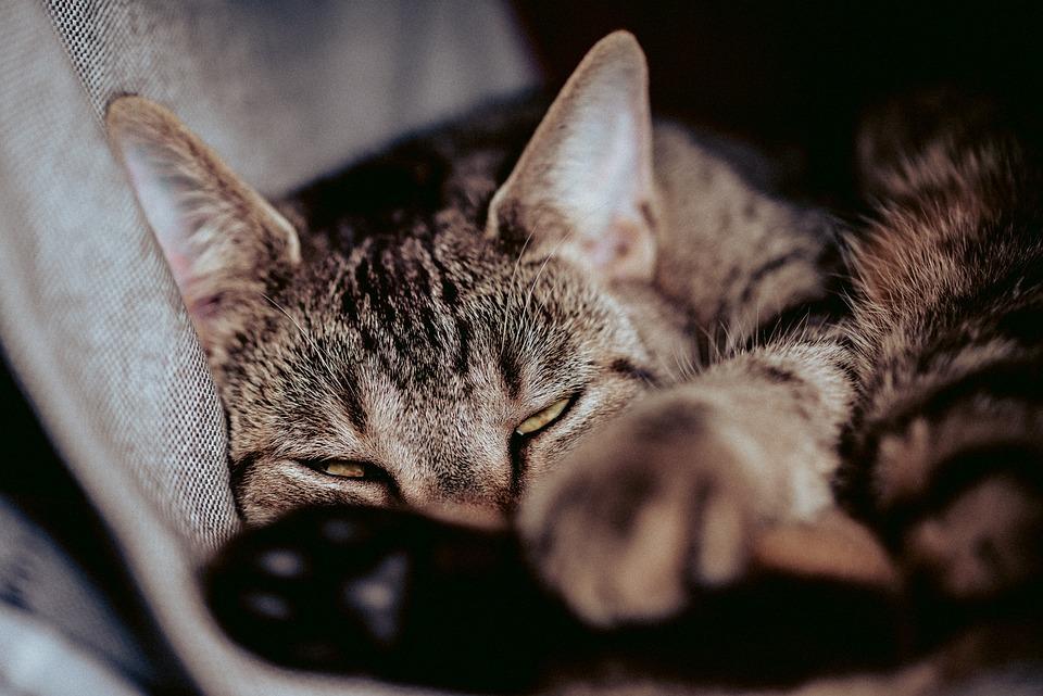 Cat, Cat's Eyes, Pet, Domestic Cat, Mackerel, Cat Face