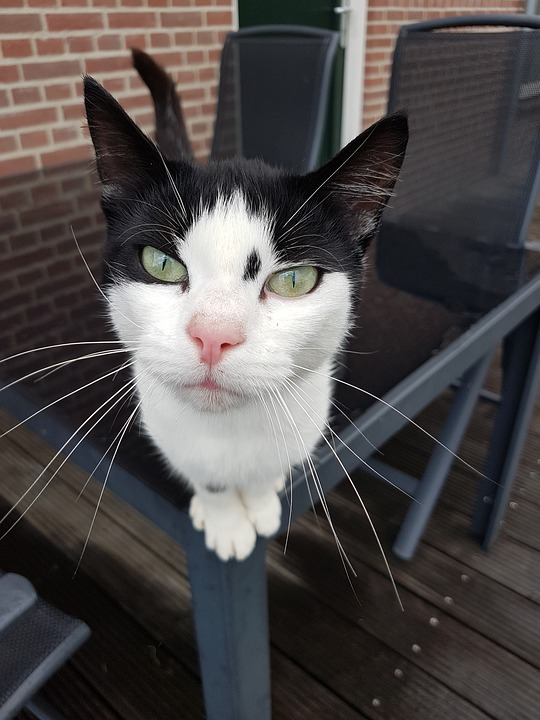Cat, Face, Cat's Eyes, View, Eyes, Whiskers, Ears, Nose