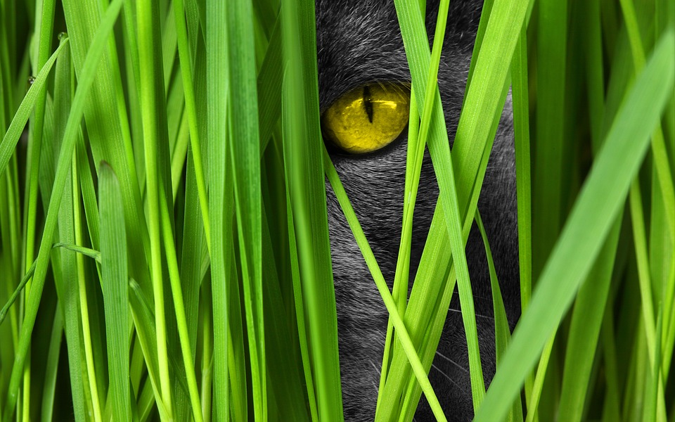 Cat, Eye, Grass, View, Lauer Position, Cat's Eyes
