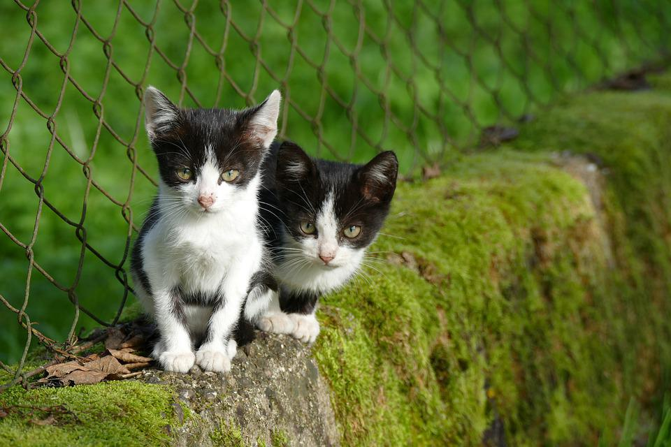 Cats, Kittens, Stone Wall, Garden, Old, Young, Pet