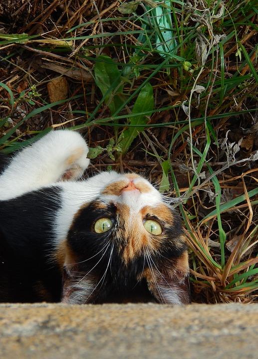 Cat, Cats, Animals, Curious, Kitten