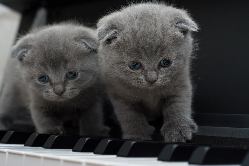 [Image: Cats-Piano-Kitty-Cat-1845787.jpg]
