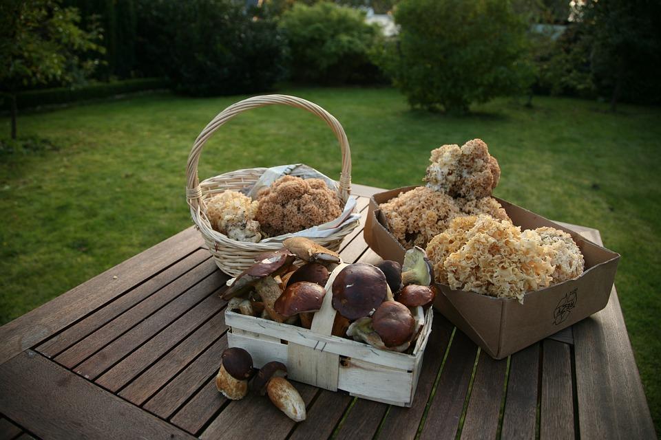 Cep, Chestnut, Cauliflower Mushroom, Forest Mushroom