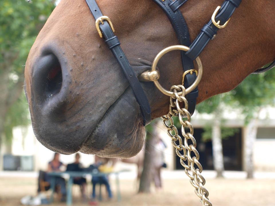 String, Security, Cavalry, Nostrils, Horse, Contest