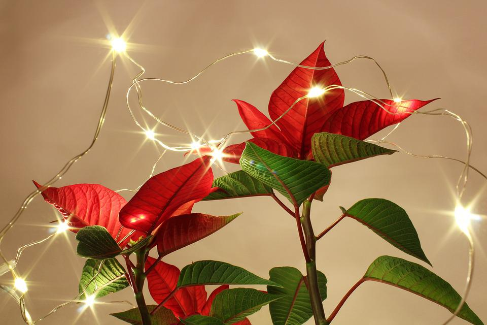 Nature, Christmas, Bright, Celebration, Season, Color