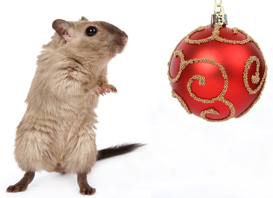 Animal, Celebration, Christmas, Claus, Close, Concept