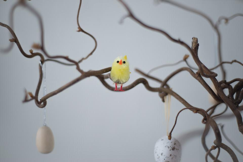 Easter, Bird, Branch, Season, Celebration, Happy