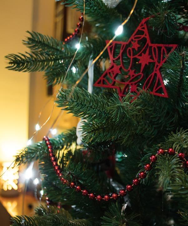 Christmas, Winter, Celebration, Fir, Tree