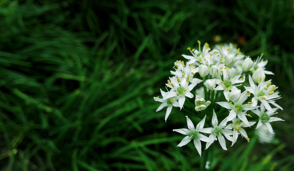 Chives, Cell Phone Cameras, Close-range Photogrammetry