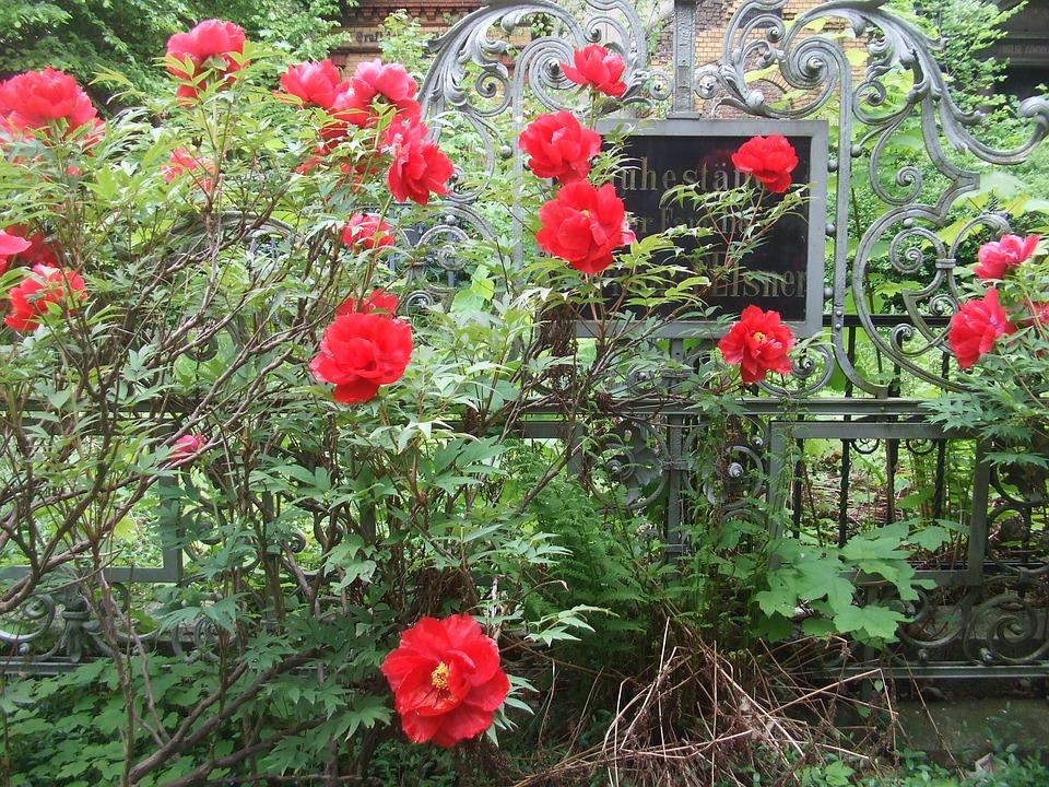 Vanitas, Old Tomb, Peony, Cemetery