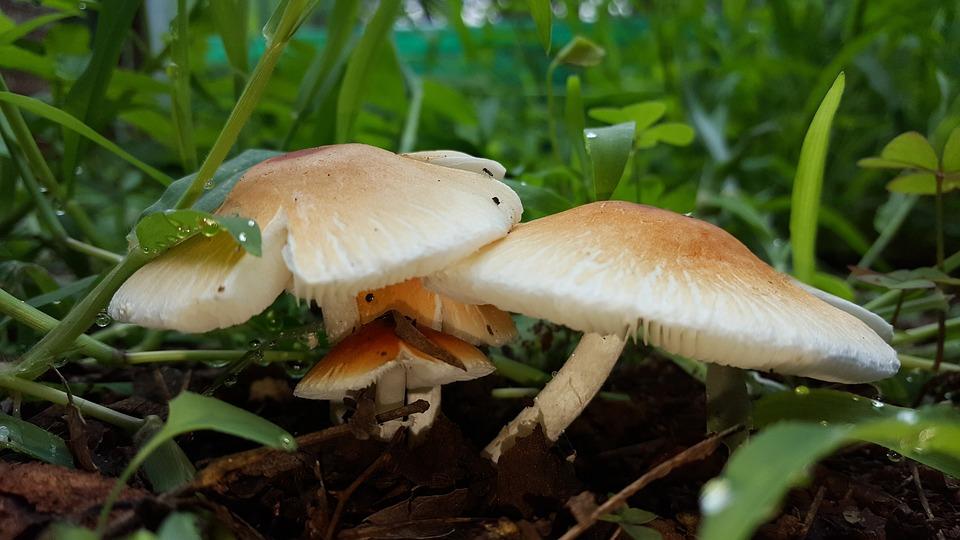 Mushroom, Cep, Soil, Boletus, Edible, Fungus