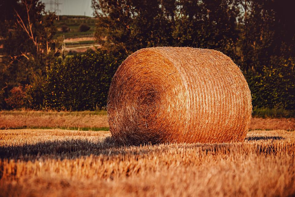 Hay Bales, Straw, Straw Bales, Cereals, Harvest, Bale