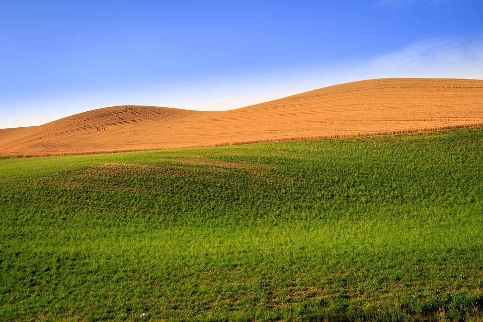 Nature, Cereals, Landscape, Fields