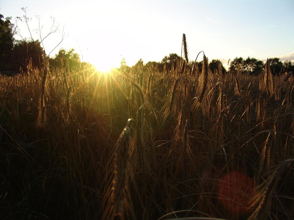 Cereals, Sunset, Nutrition