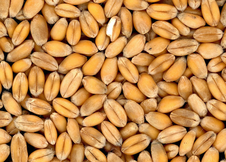 Wheat, Grains, Food, Cereals, Whole Wheat, Produce