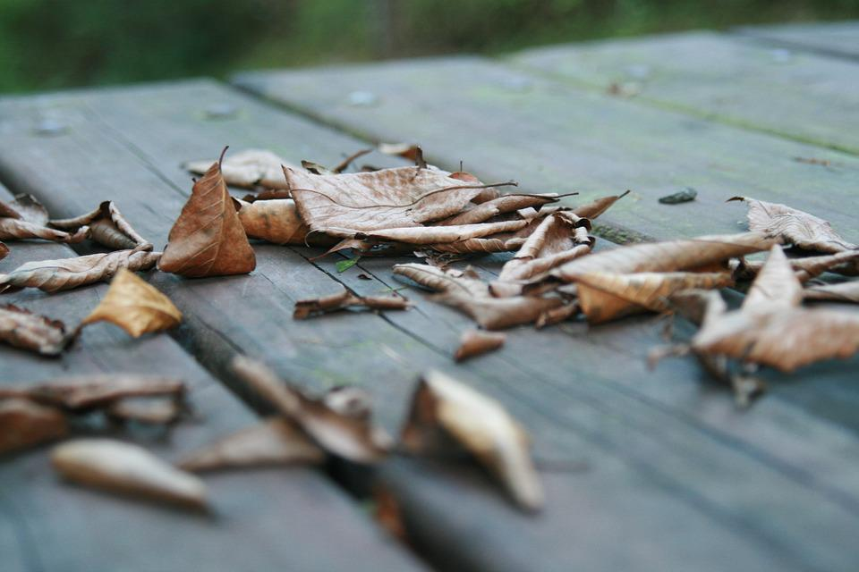 The Leaves, Autumn, Chair, Wood, Dew, Leaves, Memory