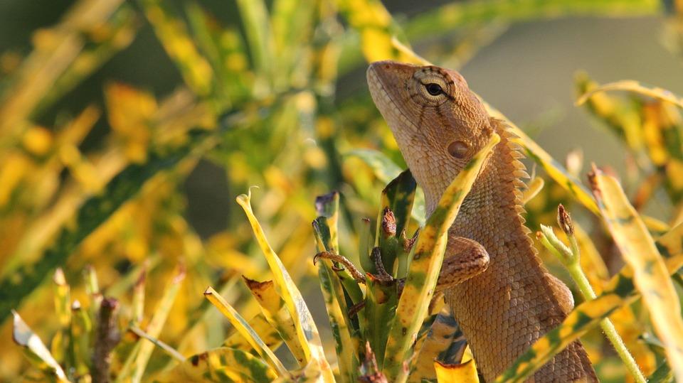 Chameleon, Nature, Animals, Beast, Dragon, Iguana