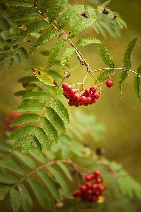 Autumn, Red, Green, Change, Golden Autumn, Leaves