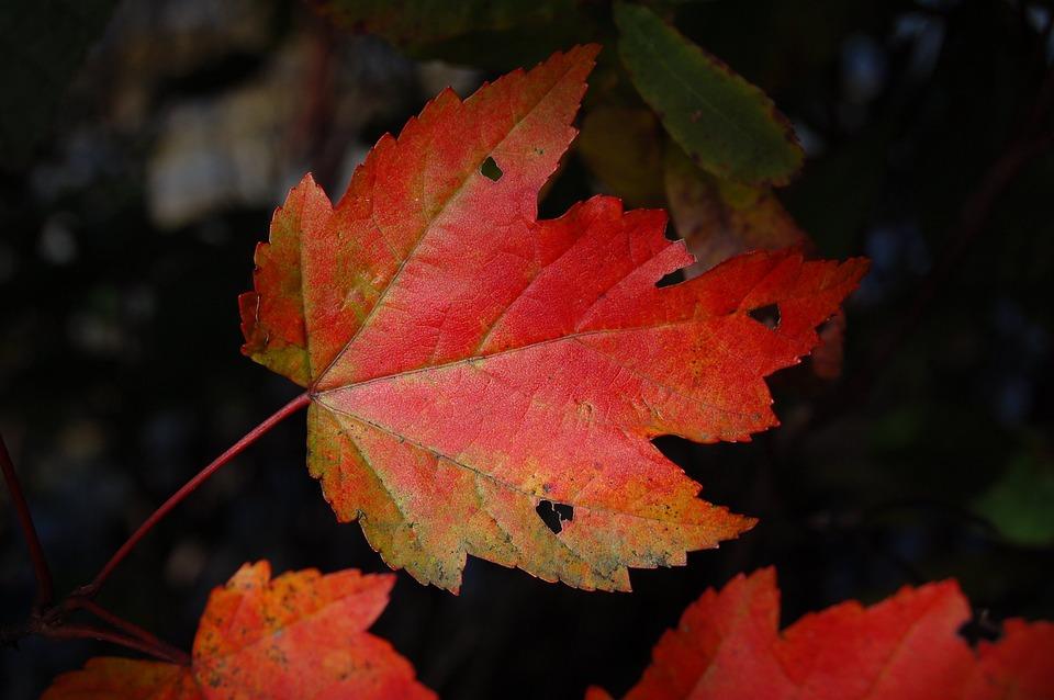 Autumn, Blur, Bright, Change, Color, Fall, Flora, Leaf