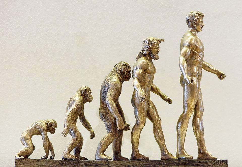 Evolution, Development, Forward, Monkey, Human, Changes