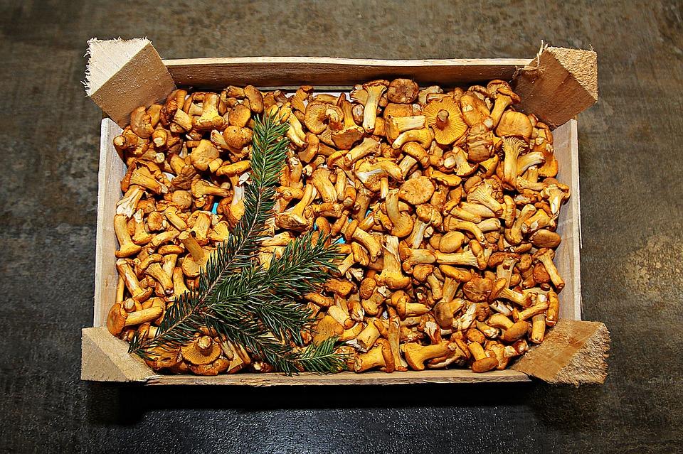 Chanterelles, Eierschwammerl, Mushrooms, Mushroom
