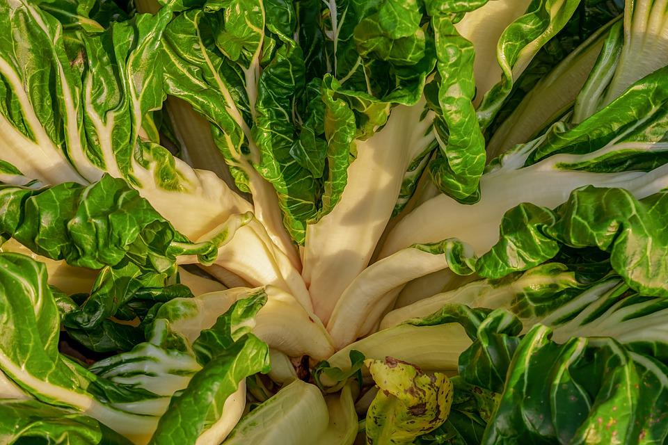 Chard, Beta Vulgaris, Vegetable Plant, Culture