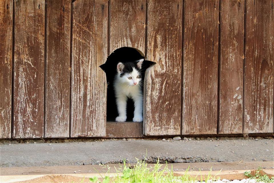Kitten, Pet, Cute, Young, Charming