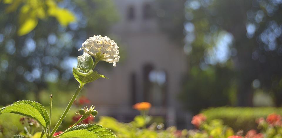 Charterhouse, Seville, Flower, Architecture, Monastery