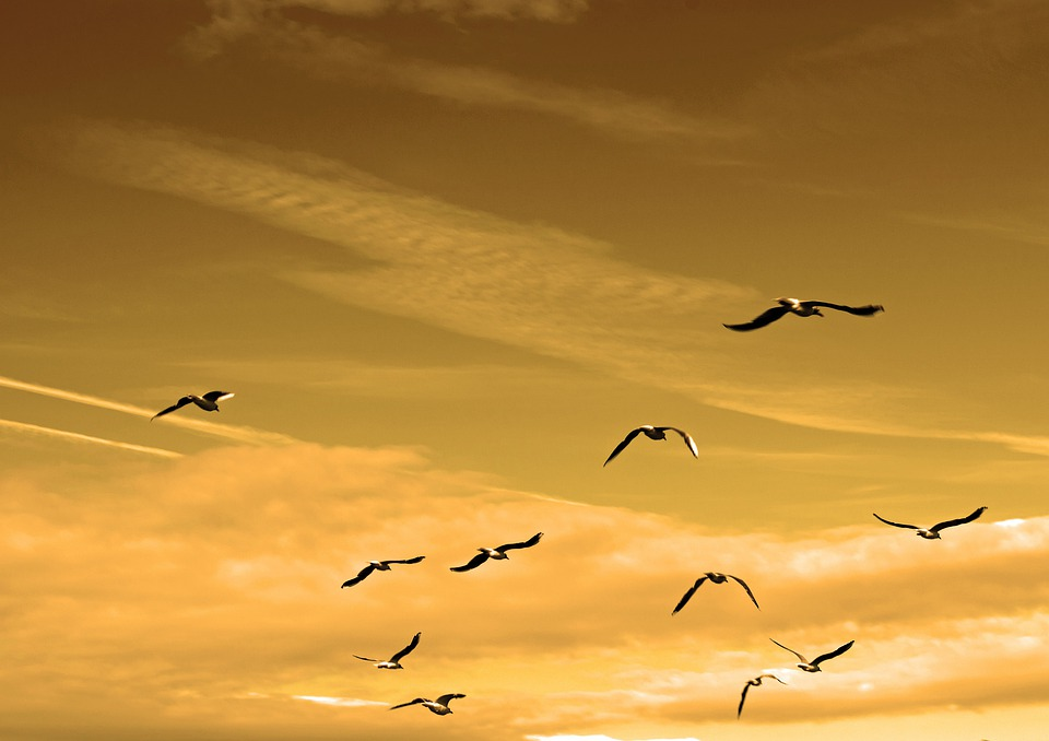 Air, Animals, Bird, Charisma, Chase, Concept, Contest