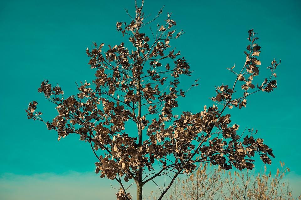 Tree, Close, Green, Abstract, Nature, Macro, Cherry