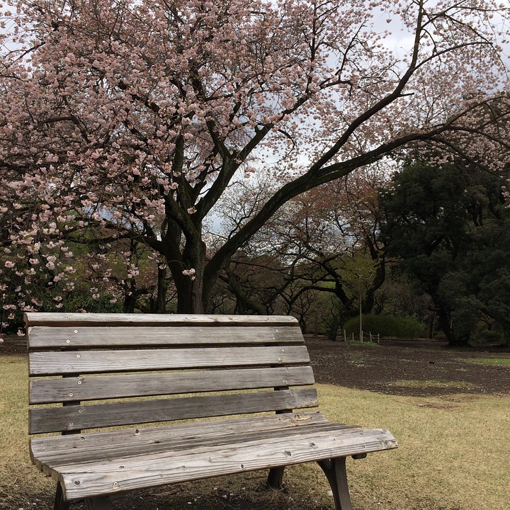 Cherry Blossom, Japan, Garden, Park, Bench