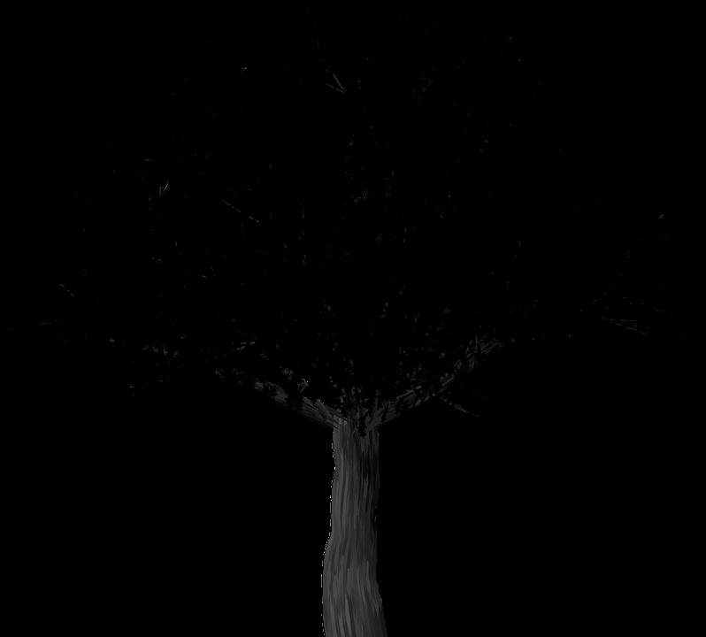 Silhouette, Cherry Blossom, Tree, Cherry Blossom Tree