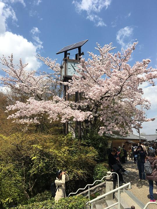 Kyoto, Kiyomizu, Cherry Blossom