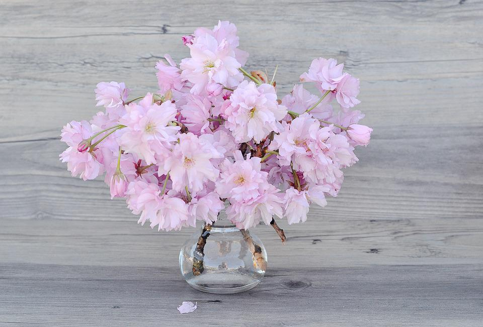 Free photo Cherry Blossoms Flowers Branches Pink - Max Pixel