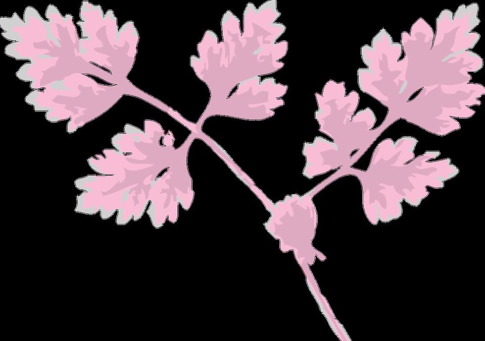 Chervil, Herb, Leaves, Plant, Pink